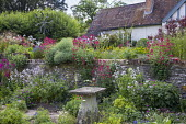 Cottage garden, stone wall, Centranthus ruber, Alchemilla mollis, Leucanthemum vulgare, Lunaria rediviva, staddle stone