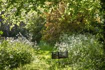 Swing hanging from tree in wild garden, Anthriscus sylvestris, cotinus