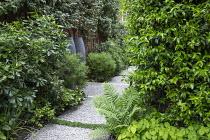Side passage, gravel path, Hebe parviflora var. angustifolia, Pittosporum tobira, Trachelospermum jasminoides climbing on house wall, large urns, Elaeagnus x ebbingei