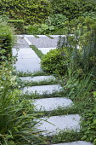 Stepping stones, Erigeron karvinskianus, limestone patio, Euphorbia characias subsp. characias 'Humpty Dumpty', Pittosporum tobira 'Nanum'