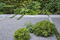 Stone path across gravel terrace, clipped Taxus baccata cube, Thymus serpyllum rills, Pittosporum tobira 'Nanum', Hydrangea arborescens 'Annabelle', Hakonechloa macra, Rodgersia aesculifolia, Alchemil...