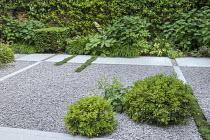 Stone path across gravel terrace, clipped Taxus baccata cube, Thymus serpyllum rills, Pittosporum tobira 'Nanum', Hydrangea arborescens 'Annabelle', Hakonechloa macra, Rodgersia aesculifolia, Achemill...