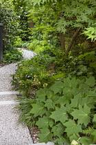 Gravel path through shady area, Kirengeshoma palmata, hellebores
