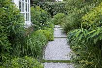 Side passage, gravel path, Libertia grandiflora, Pittosporum tobira 'Nanum', Euphorbia schillingii, Allium nigrum