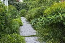 Side passage, gravel path, Libertia grandiflora, Pittosporum tobira 'Nanum', Euphorbia schillingii, Hebe parviflora var. angustifolia