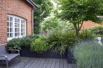 Roof terrace, Pittosporum tobira 'Nanum', Libertia grandiflora, rosemary, Lavandula angustifolia 'Munstead' and Cornus mas in raised bed, chair on decking