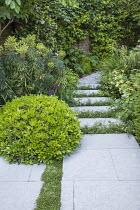 Stepping stones, Erigeron karvinskianus in limestone paving cracks, Euphorbia characias subsp. characias 'Humpty Dumpty', Pittosporum tobira 'Nanum' dome