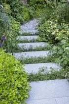 Stepping stones, Erigeron karvinskianus in limestone paving cracks, euphorbia, Pittosporum tobira 'Nanum', Helleborus × hybridus Harvington white