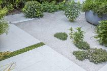 Thyme and Euphorbia schillingii in Bredon gravel terrace, Soleirolia soleirolii rill in stone paving
