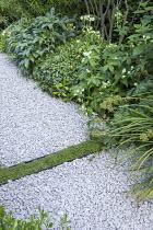 Gravel path, Soleirolia soleirolii rill, Astrantia major 'White Giant', Helleborus argutifolius, Libertia grandiflora
