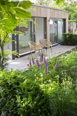Contemporary chairs on decking by pavilion, foxgloves, Astrantia major 'Large White' and 'Rosensinfonie', yew hedge