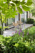 Contemporary chairs on decking by pavilion, foxgloves,Astrantia major 'Large White' and 'Rosensinfonie', yew hedge