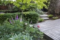 Digitalis purpurea, yew hedge, decking, Acer palmatum, circular stepping stones, Cenolophium denudatum