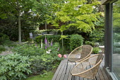 Contemporary chairs on decking by pavilion, Digitalis purpurea, peonies, yew hedge, Acer palmatum, Helleborus argutifolius, Cenolophium denudatum