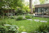 Stepping stone path across lawn, Hakonechloa macra, Saxifraga umbrosa, Libertia grandiflora, chairs on terrace by contemporary pavilion, dining table and chairs, Rodgersia podophylla 'Braunlaub'