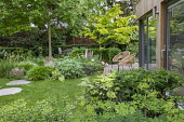 Contemporary chairs on decking by pavilion, stepping stones across lawn, table and chairs, Digitalis purpurea, Helleborus argutifolius, Hakonechloa macra, Acer palmatum