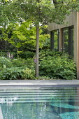Contemporary swimming pool and pavilion, Aruncus 'Horatio', Helleborus argutifolius