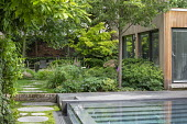 Stepping stone path by contemporary infinity swimming pool, Soleirolia soleirolii, pavilion, Libertia grandiflora,  Geranium nodosum 'Clos du Coudray', Aruncus 'Horatio', Helleborus argutifolius
