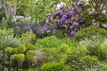 Chairs on terrace, Erigeron karvinskianus, Salvia nemorosa 'Caradonna', Euphorbia x martini, alliums, rhododendrons, Pinus mugo