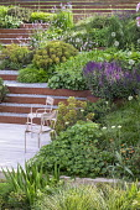 Chairs on decking, Geranium 'Rozanne', Salvia nemorosa 'Caradonna', Pinus mugo, Hakonechloa macra, Persicaria bistorta 'Superba', Euphorbia x martini, Cor-Ten steel edged gravel steps, alliums, Geum '...