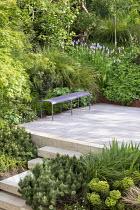 Purple bench on decking, Acer palmatum, Persicaria bistorta 'Superba', Geranium 'Rozanne', Euphorbia x martini, Pinus mugo