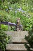 Cat sitting at top of steps, purple bench