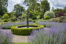Circular water fountain in rose garden, Nepeta x faassenii, low box hedge edging, Pittosporum tenuifolium 'Irene Paterson'