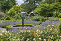 Circular water fountain in rose garden, Nepeta x faassenii, low box hedge edging