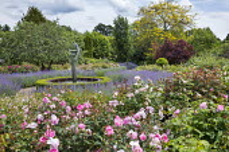 Circular water fountain in rose garden, nepeta, low box hedge edging