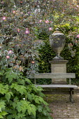 Wooden bench on terrace by large urn on plinth, Rosa glauca, anemone