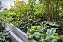 Bamboo, rodgersia, hosta, ligularia, Melanoselinum decipiens, Fatsia japonica, Aralia cordata