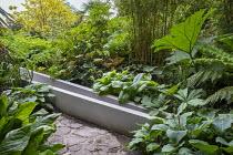 Bamboo, rodgersia, hosta, ligularia, Melanoselinum decipiens, Fatsia japonica