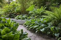 Shady exotic garden bamboo, rodgersia, hosta, ligularia, Melanoselinum decipiens, Fatsia japonica