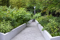 White raised beds in contemporary garden, euphorbia, schefflera, Aralia cordata, fountain focal point, Lobelia tupa, Musa basjoo