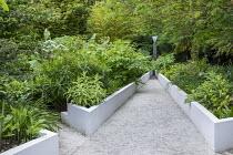 White raised beds in contemporary garden, euphorbia, schefflera, Aralia cordata, fountain focal point, Lobelia tupa