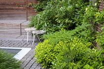 Pittosporum tobira, Schefflera taiwaniana, Trachelospermum jasminoides, Hakonechloa macra, metal chairs on stone sett patio