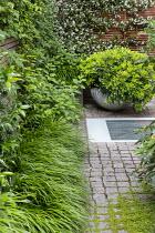 Hakonechloa macra, Trachelospermum jasminoides climbing on fence, Pittosporum tobira, stone sett patio, skylight