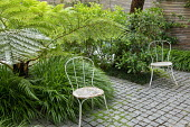 Cyathea cooperi underplanted with Hakonechloa macra, Pittosporum tobira, metal chairs on stone sett patio