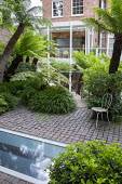 Dicksonia antarctica underplanted with Hakonechloa macra, Pittosporum tobira, metal chair on stone sett patio, Cyathea cooperi, skylight