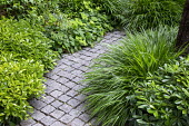 Stone sett path, Hakonechloa macra, Pittosporum tobira, Epimedium × perralchicum 'Fröhnleiten'
