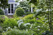 Cornus kousa, amsonia, Euphorbia x pasteurii, Hydrangea arborescens 'Annabelle'