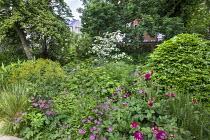 Fagus sylvatica dome, astrantia, Rosa 'Munstead Wood', Euphorbia x pasteurii, Rosmarinus officinalis, Hydrangea arborescens 'Annabelle', Cornus kousa