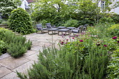 Contemporary chairs with cushions on stone terrace, large clipped hornbeam domes, astrantia, roses, Rosmarinus officinalis, Amsonia orientalis