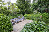 Contemporary chairs with cushions on stone terrace, large clipped Fagus sylvatica domes, astrantia, Hydrangea arborescens 'Annabelle', Euphorbia x pasteurii, Rosmarinus officinalis, Amsonia orientalis...