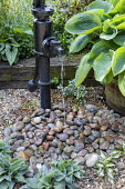 Black water pump fountain, pebbles, hosta in large pot