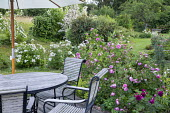 Roses around table and chairs under umbrella on decking