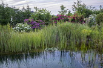 Natural swimming pond, roses