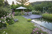 Table, chairs and umbrella on decking by natural swimming pond, Rosa 'Absolument Claude'