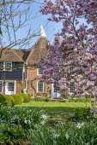 Magnolia x soulangeana, view to oast houses, Leucojum vernum, daffodils