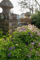 Lathyrus vernus by gate with brick piers